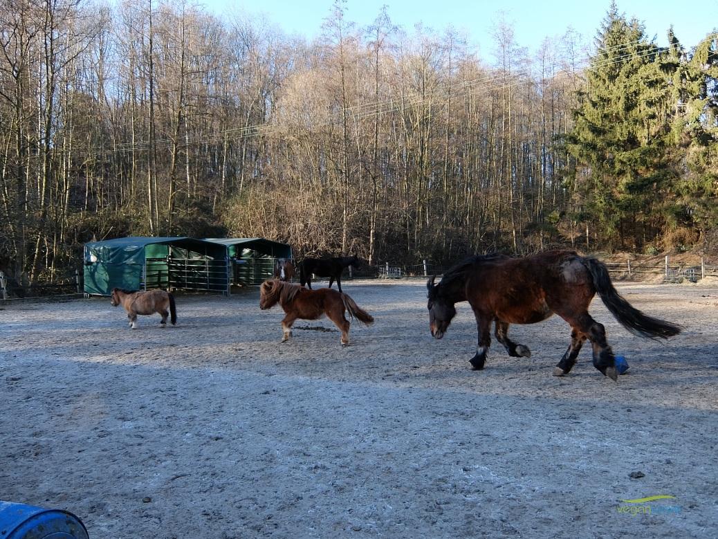 Tierschutzhof im Ruhrtal
